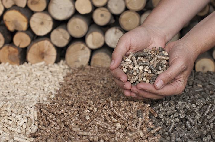 Estado del sector de la biomasa en Cataluña