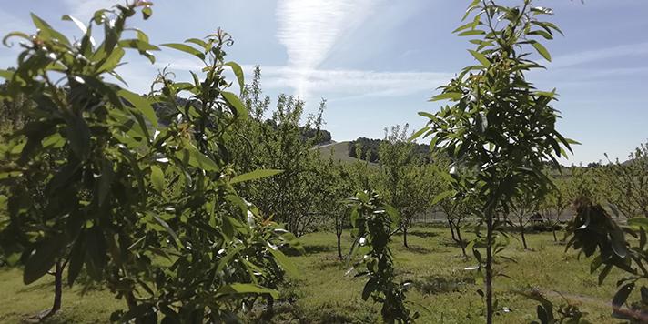 Simbiosis entre la industria y la agricultura a través del reciclado de nutrientes