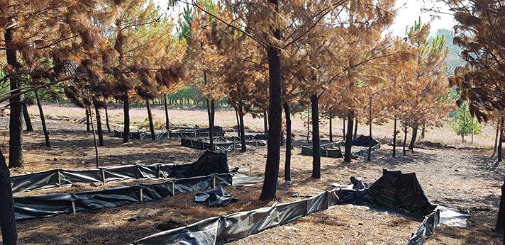 El proyecto europeo LIFE REFOREST comienza la   validación de sus pilotos en zonas afectadas por incendios forestales