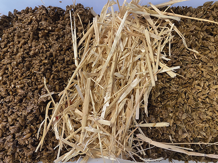 Producción de biopesticidas fúngicos: una alternativa para la valorización de residuos agroindustriales